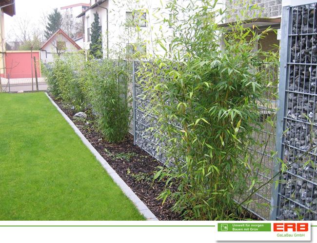 Zaun Pflanzen Hecke Pflanzen Stilvoller Lebendiger Zaun Zaun